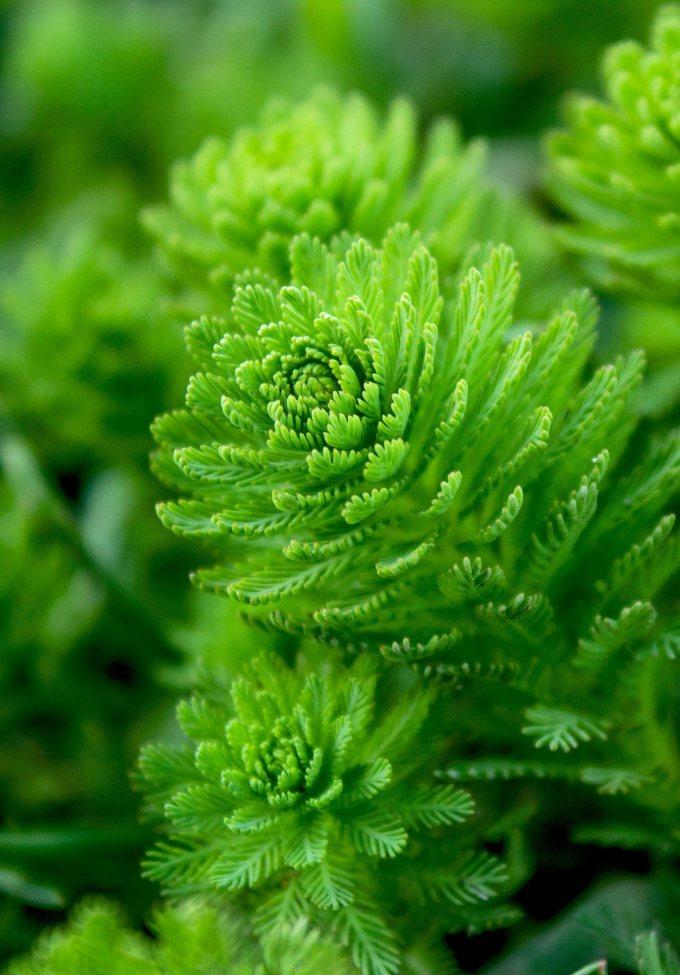 algenpackung gegen cellulite